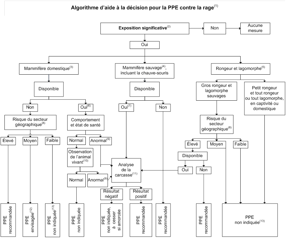 Vaccin Chiot Calendrier.Vaccin Contre La Rage Vaccins Professionnels De La Sante